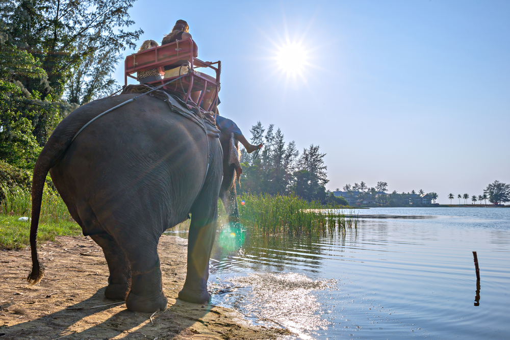 Elephant riding for tourists in Phuket Province, Thailand_181750922