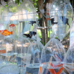 Collectable tropical fish_387620179