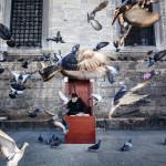 pigeons flying_260442911