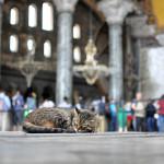 Hagia Sophia (Ayasofya) _307592477
