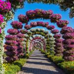 Miracle Garden Park_355032080