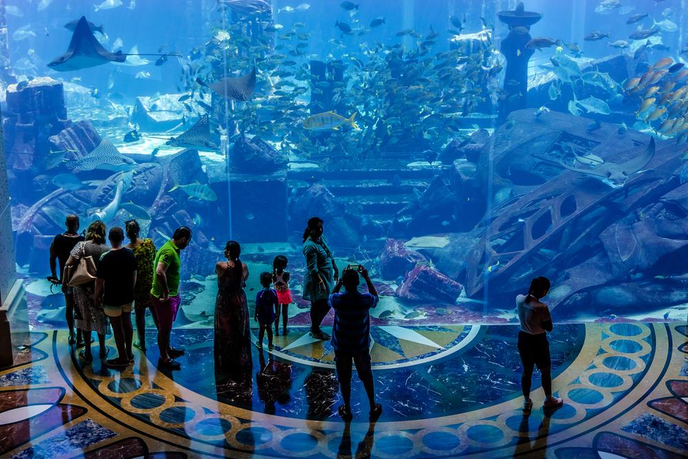 aquarium in 5 stars Hotel Atlantis_317663282