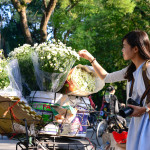Vietnam white daisy flowers bloom_358559384