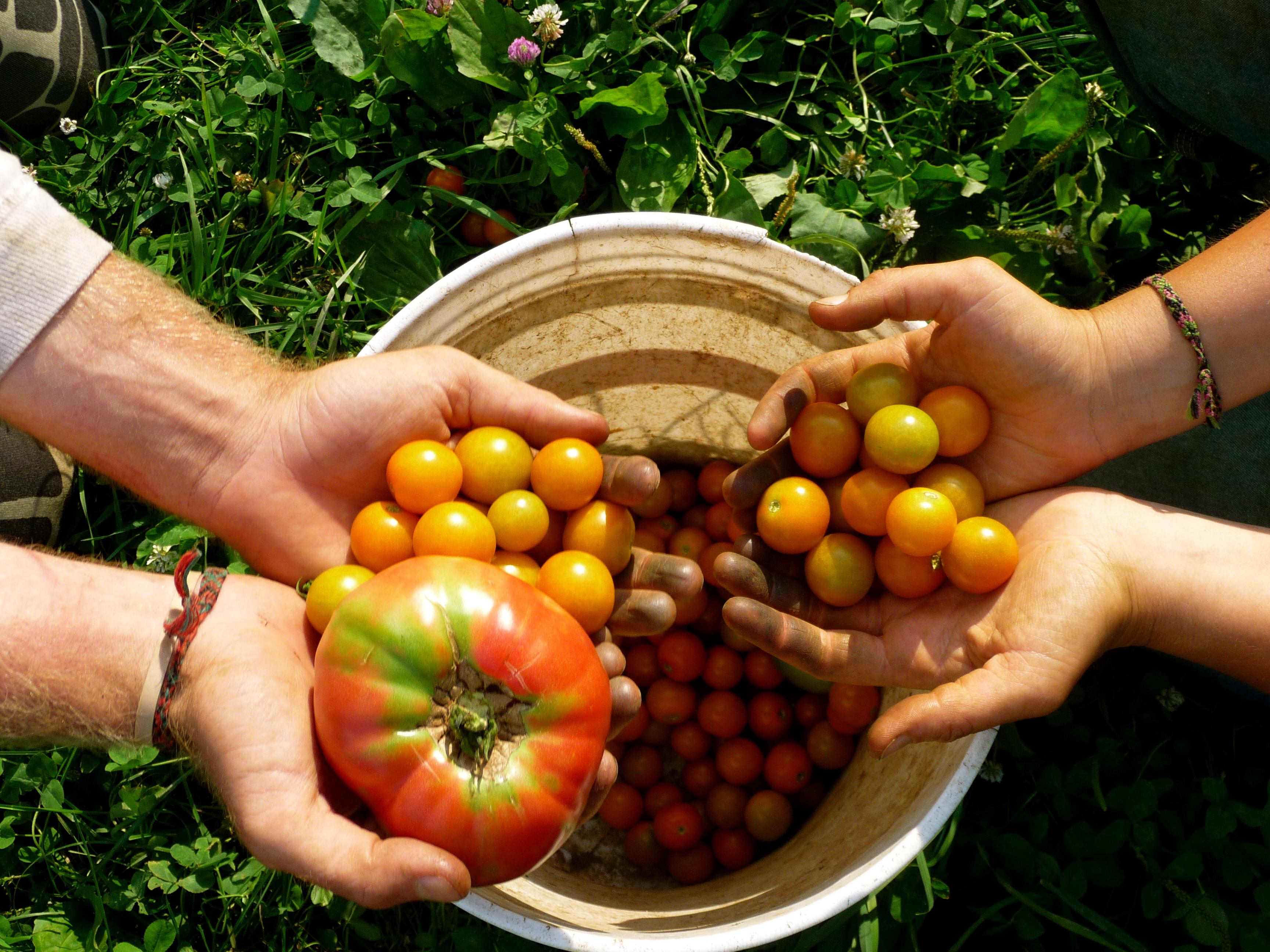 organic vs inorganic farming essay