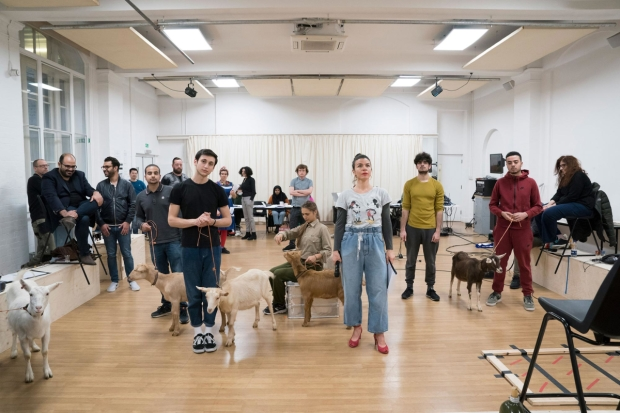 The cast of Goats in rehearsals