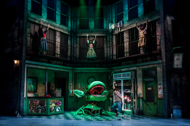 Company of Little Shop of Horrors