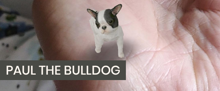 Paul the Bulldog - Cute Dog Instagram Filter