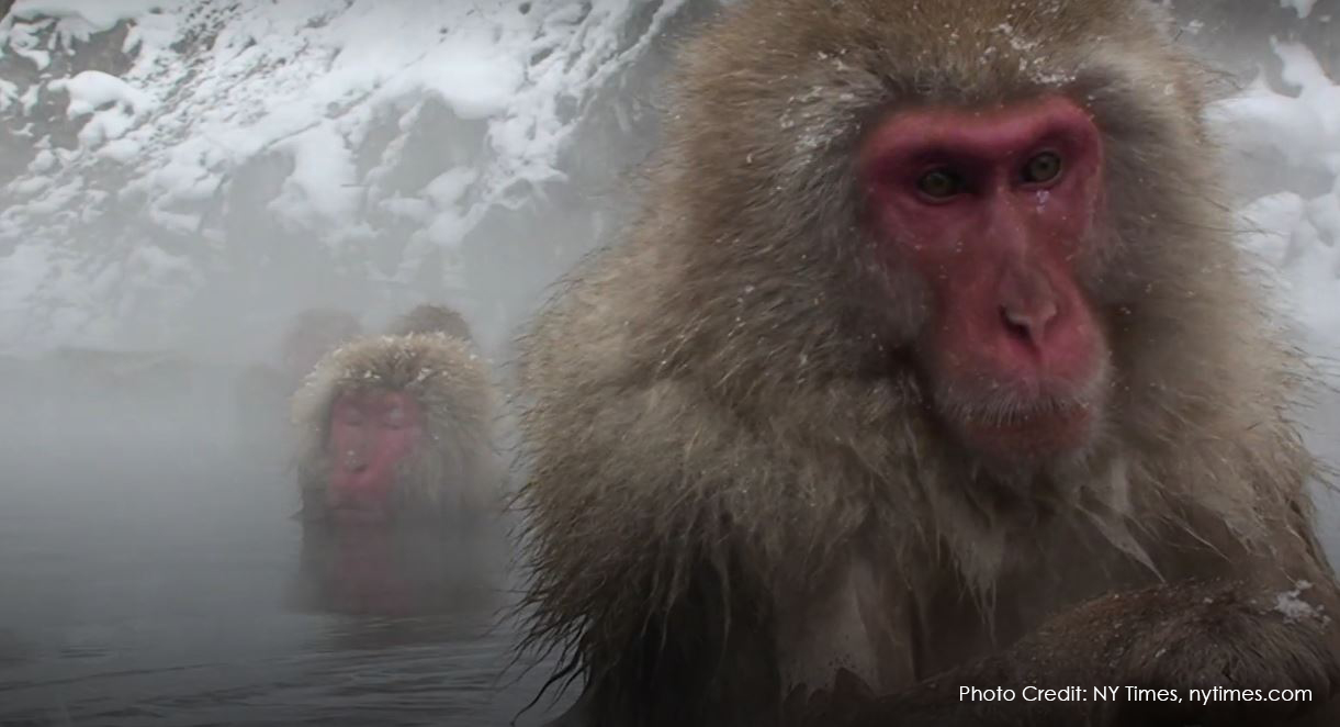 Why We Should All Monkey Around (in the Hot Tub)