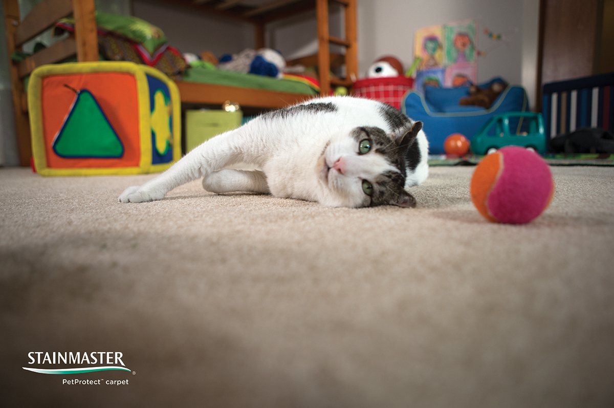 Coles Fine Flooring | Stain Protection for Your Carpet
