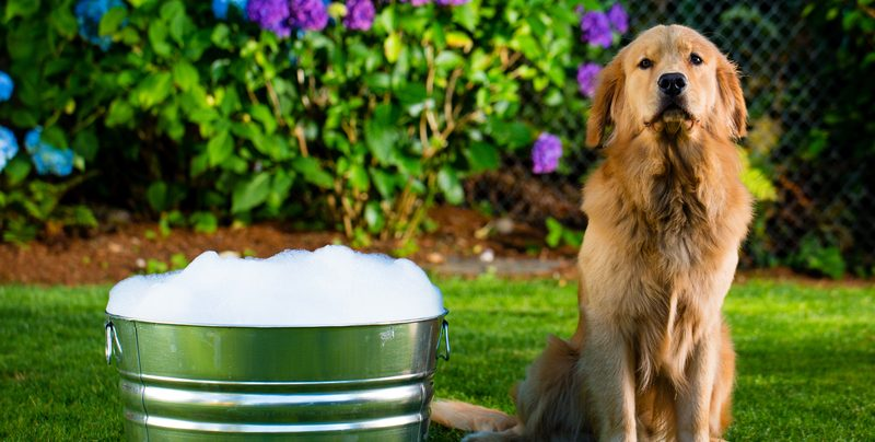 Can Your Pets Enjoy Your Hot Tub with You?
