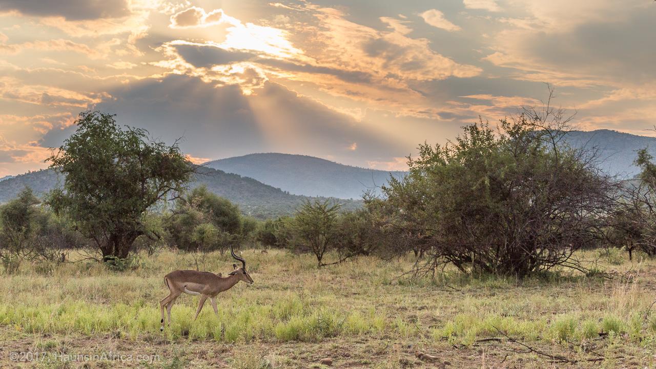 Image result for Pilanesberg National Park