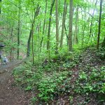 Hiking the short paved trail to the falls