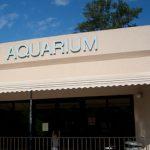 The aquarium at Magnolia Springs State Park