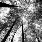 mistletoe-state-park-12.jpg
