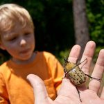 Holding up a rhino beetle for Trey to check out
