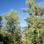 victoria-bryant-state-park-06