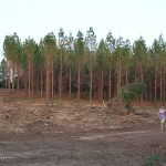 What's left of our favorite forest!