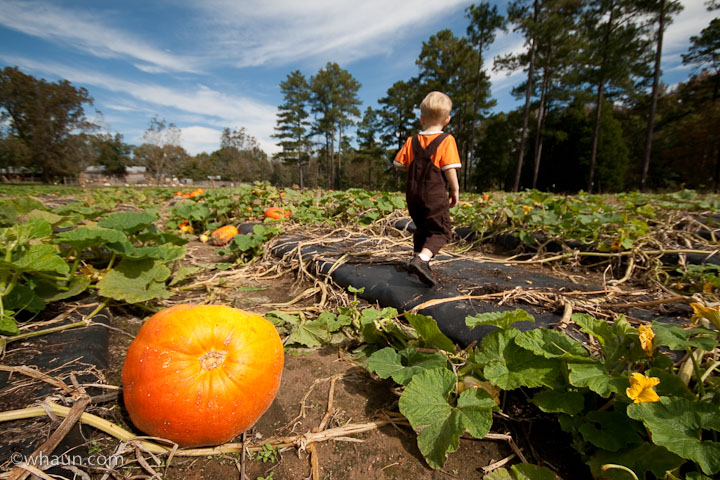 The pumpkin patch was looking pretty sparse