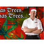 Christmas Trees at Banks Power