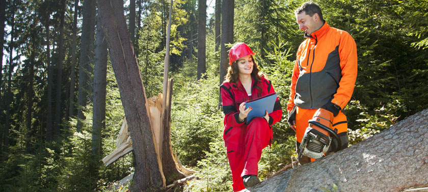 Degrees in forestry can help you apply your skills to jobs protecting our natural resources.