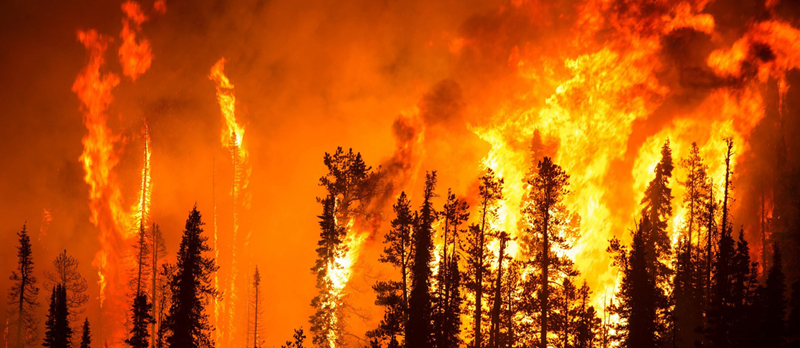 "Who ""owns"" wildfire?"