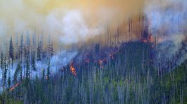 glacier burning wildfire