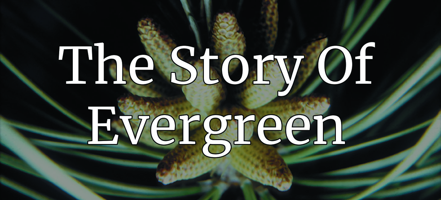 The story of evergreen
