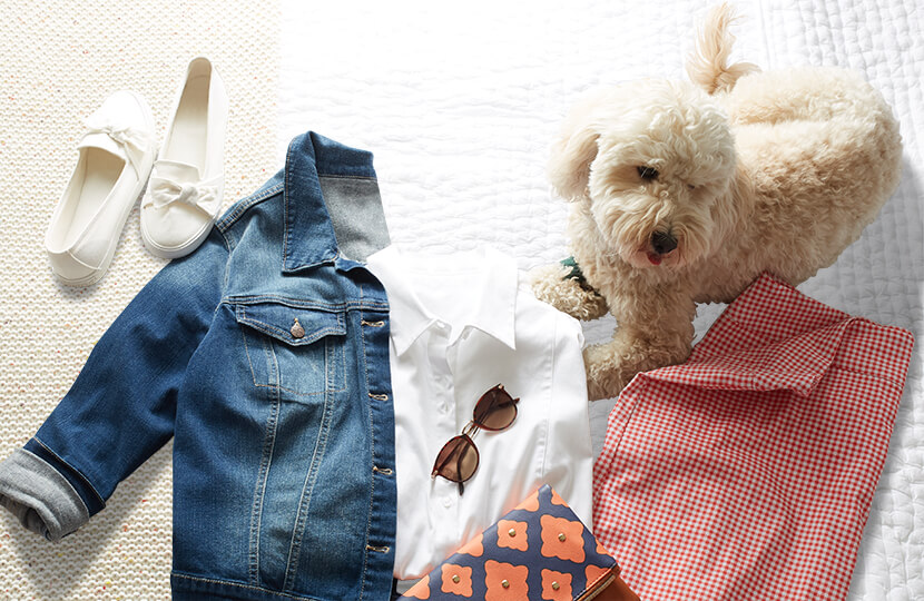 Lulu the dog laying on a bed around a denim jacket, gingham skirt, and white top.