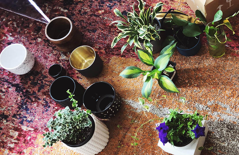 plant style array of different potted plants