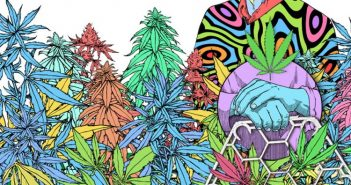 Honey Comber: cultiva tu propia planta de cannabis