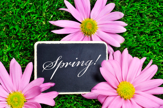 Spring Is the Perfect Time for Planting Success Seeds