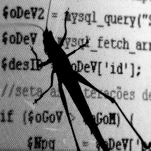 literal bug on a computer screen with code.