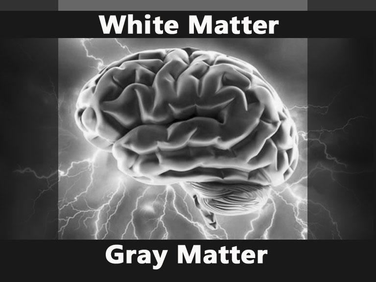white-matter-gray-matter-jpg
