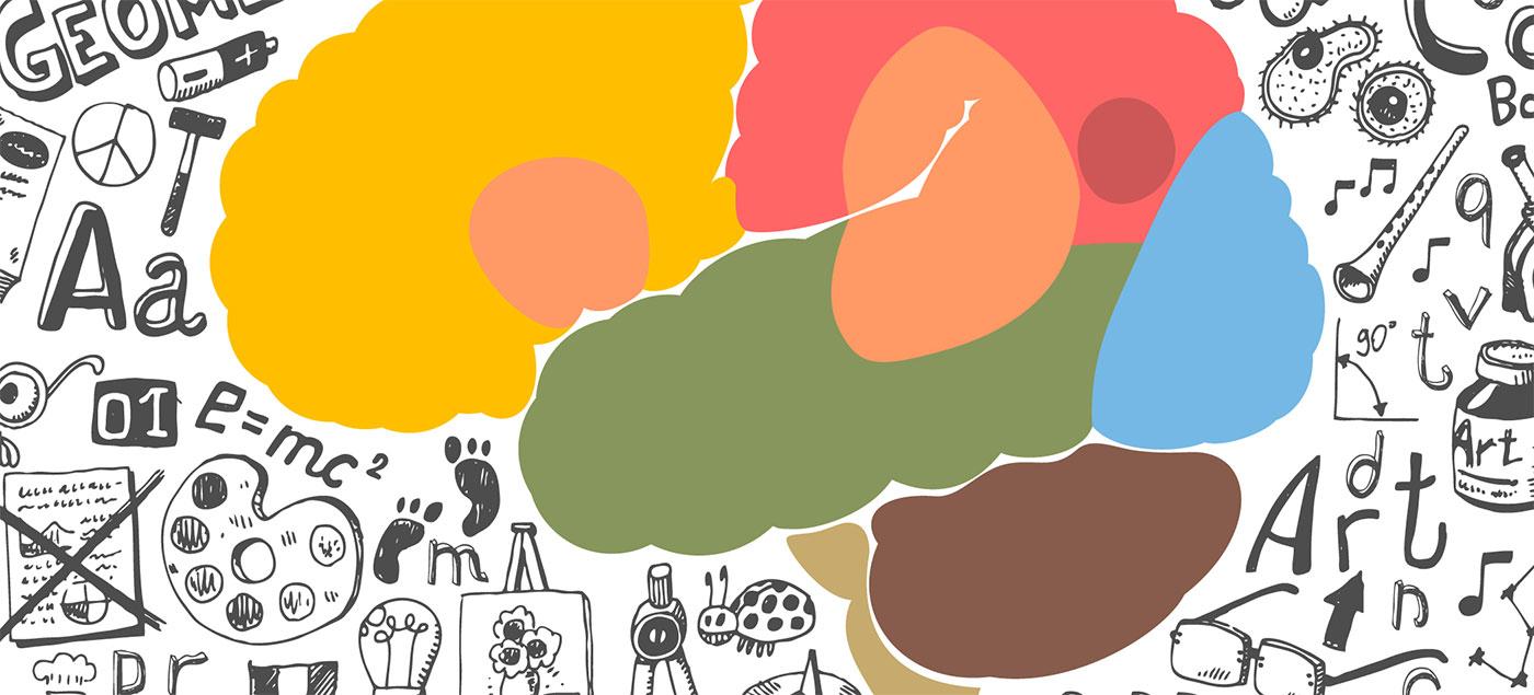 brain-development-jpg