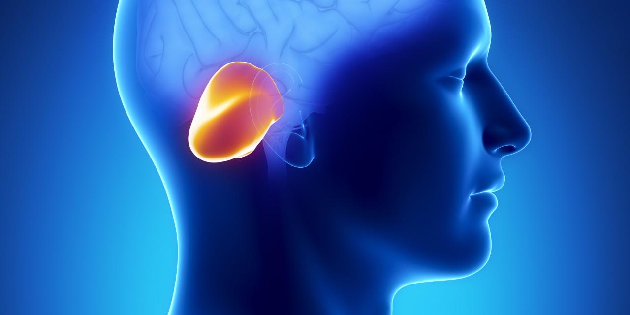 cerebellum-1280x640-jpg