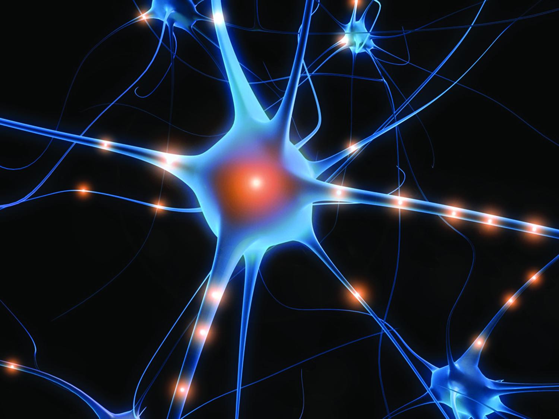 brain-activity-neurons-signals-jpg