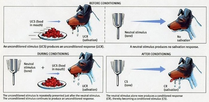 custom paper on classical conditioning