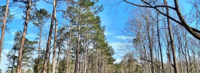 Montepelier Station - Lot 6 - 18.86 Acres with pond site