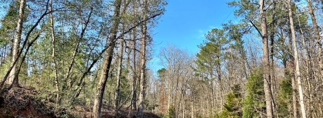 Montepelier Station Lot 5 - 4 Acres