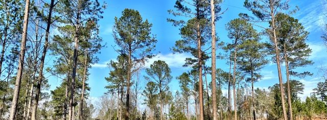 Montepelier Station - Lot 12 - 10.82 Acres