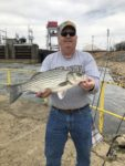 Craig Archer of New Martinsville, W.Va. shows off a hybrid striper caught from the Ohio River at the Hannibal Lock and Dam Hydro Plant in 2018