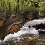 Eddie Vincent of Buckhannon, W.Va. shows off a rainbow trout caught from the Holly River