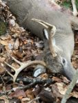 Jeremy Hyre of Independence, W.Va. killed this 7 point buck in a place he called Hickory Ridge Farm
