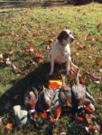 Keith Cutright of Buckhannon, W.Va. shares this photo of his dog Cooper after a successful opening day of pheasant hunting in Pennsylvania with a buddy.