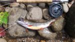 William Way of Lumberport, W.Va. shares a picture of a nice brook trout he caught while fall fishing on Otter Creek in the West Virginia mountains.
