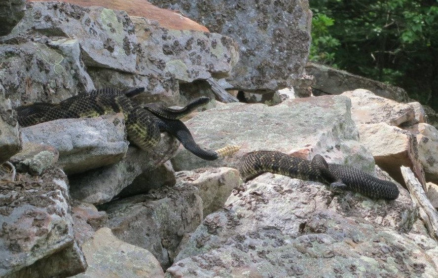 WVMetroNews - Proposed regulations aim to protect WV critters