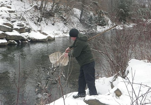 Trout stocking in va videos of naked moms for Wv fish stocking