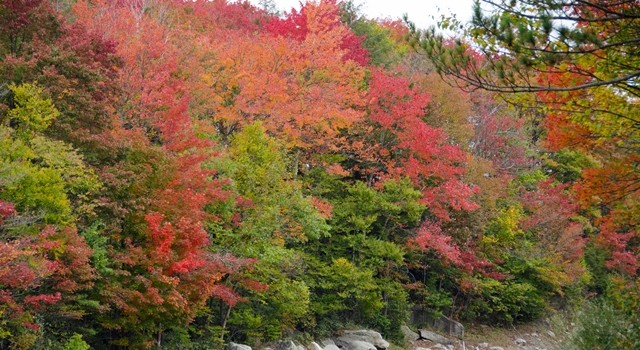 The Davis-Thomas area of Tucker County is showing some good colors.