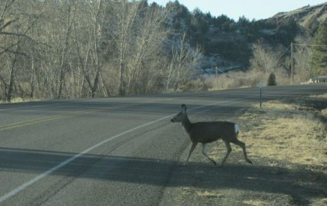 West Virginia remains the most likely state to hit a deer while driving.