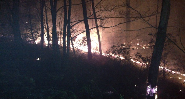 A picture of the Smoke Hole Fire moving along the ground and consuming accumulated debris and deadwood